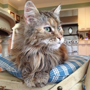 Tabitha the 19 year old Maine Coon cat just started enjoying snuggles of 18 years of being too cool for school.