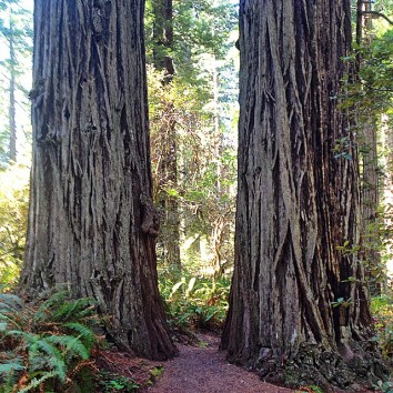 Red Woods National Forest in northern California is a magical place to quietly listen to your inner wisdom.
