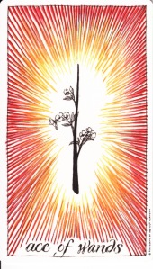 Ace of Wands Wild Unknown tarot